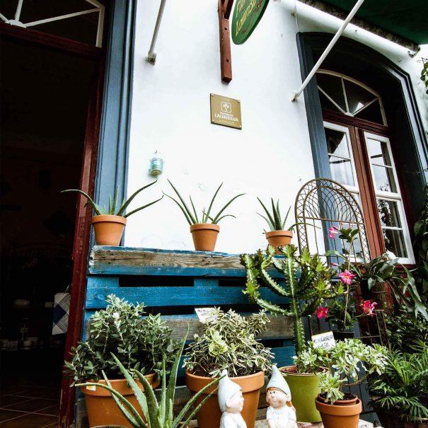 floristeria-laurisilva-gomera-hermigua12